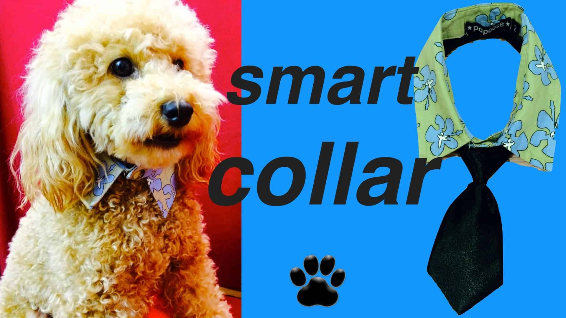 Silly necktie dog collar