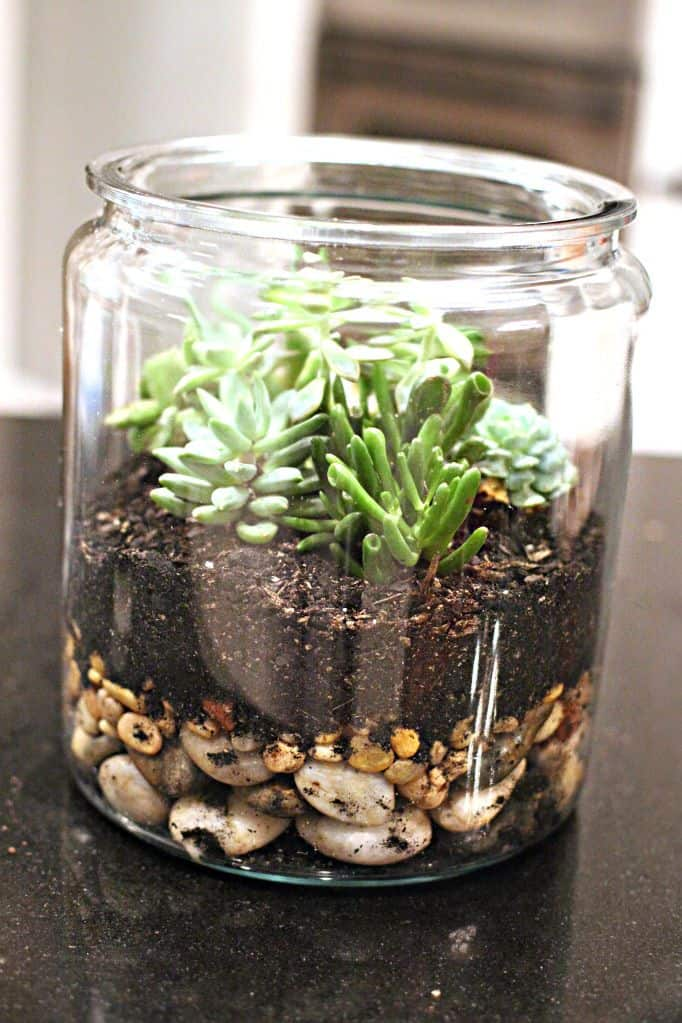 Diy succulent terranium from old candle jar