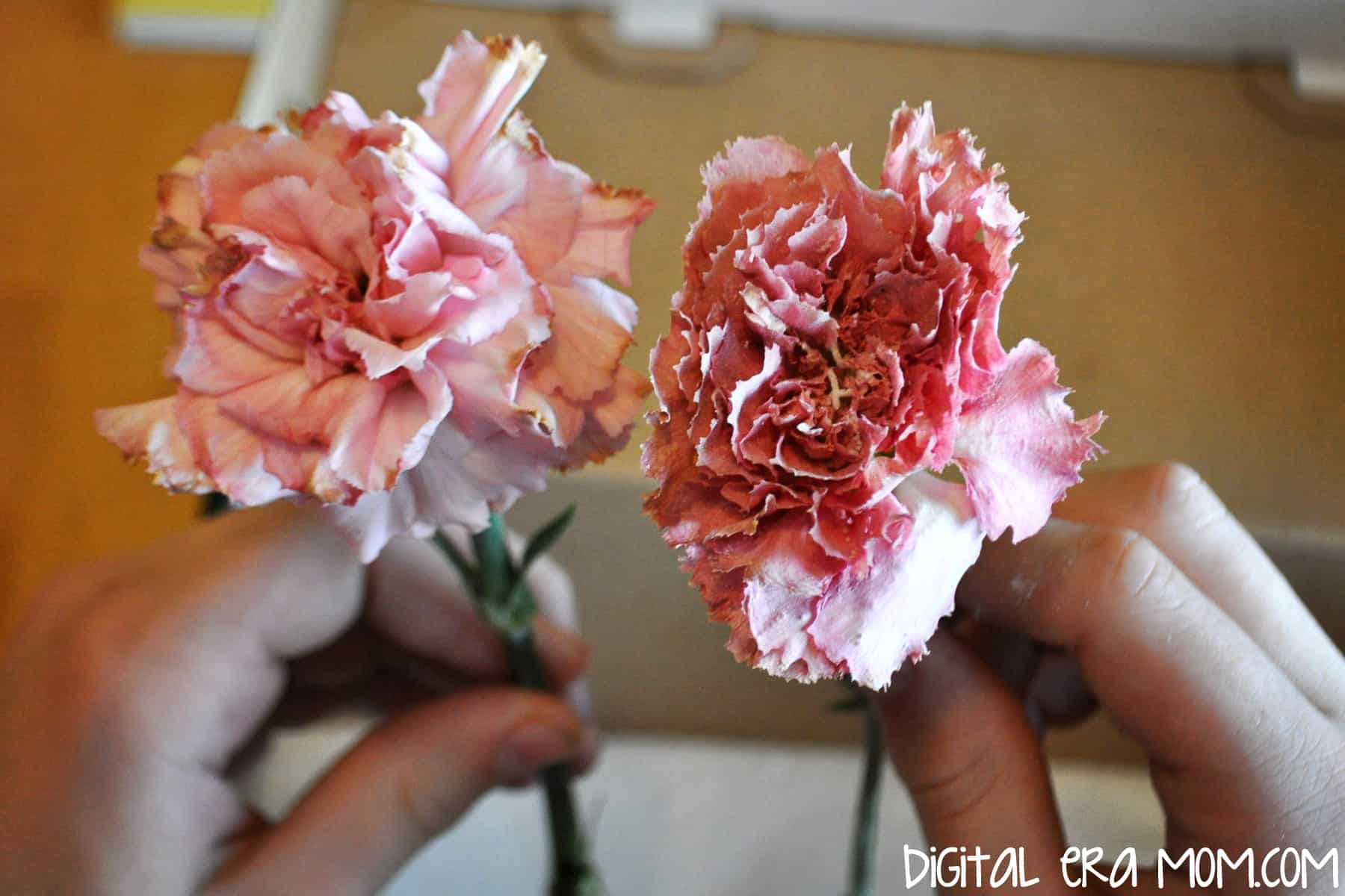 Preserve flowers with borax