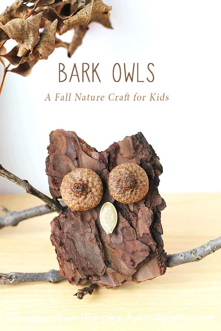 Tree bark, acorn cap, and seed beak owls