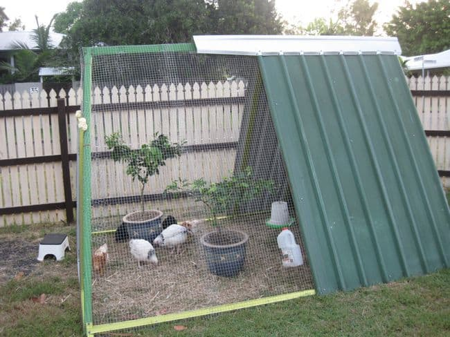 Diy a frame chicken coop