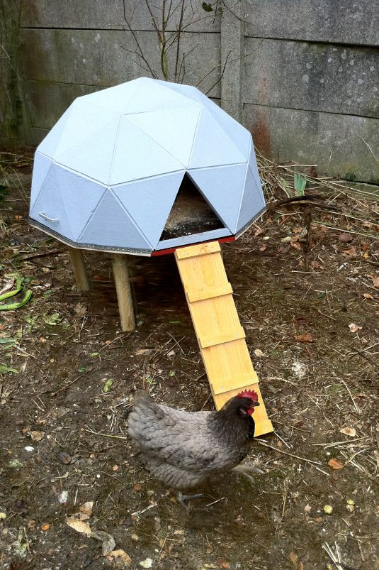 Diy geometric dome coop
