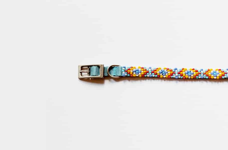 Carefully beaded dog collar