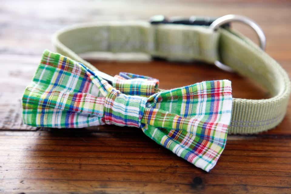 Classy bowtie dog collar