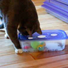 Diy cat puzzle from a tupperware