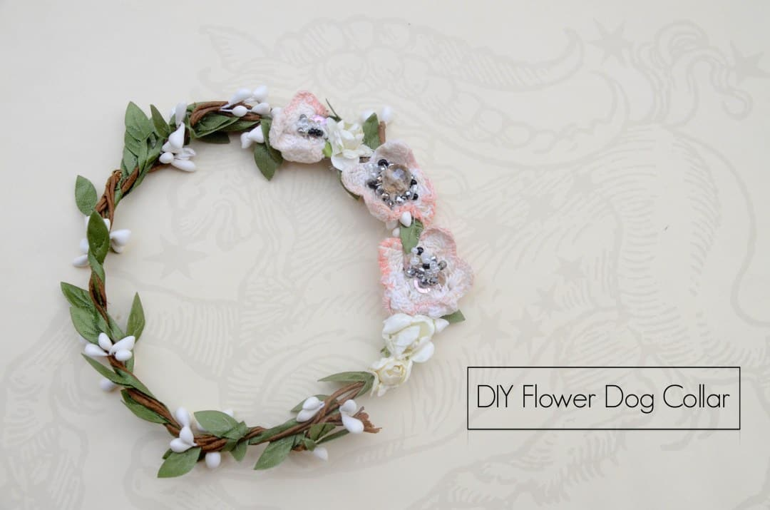 Flower dog collar for special occasions