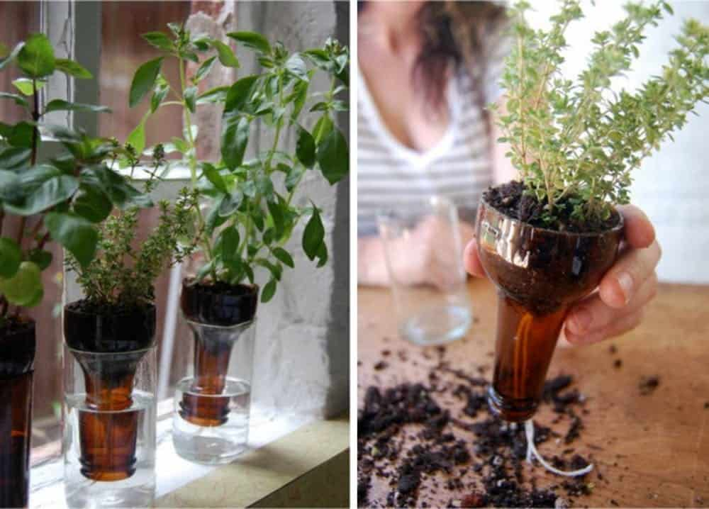 Diy bottle garden planter