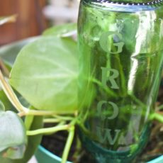 Diy glass etched plant watering bottle