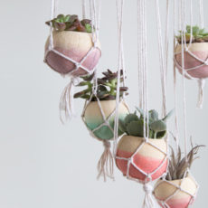 Dip dyed bell cup succulent planters