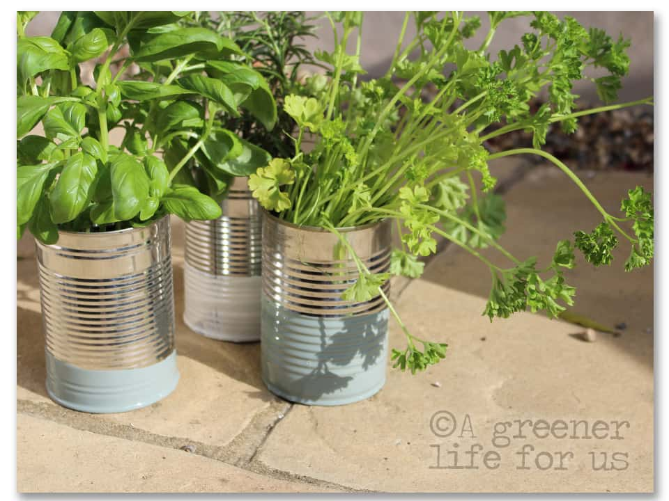 Paint dipped tin can planters