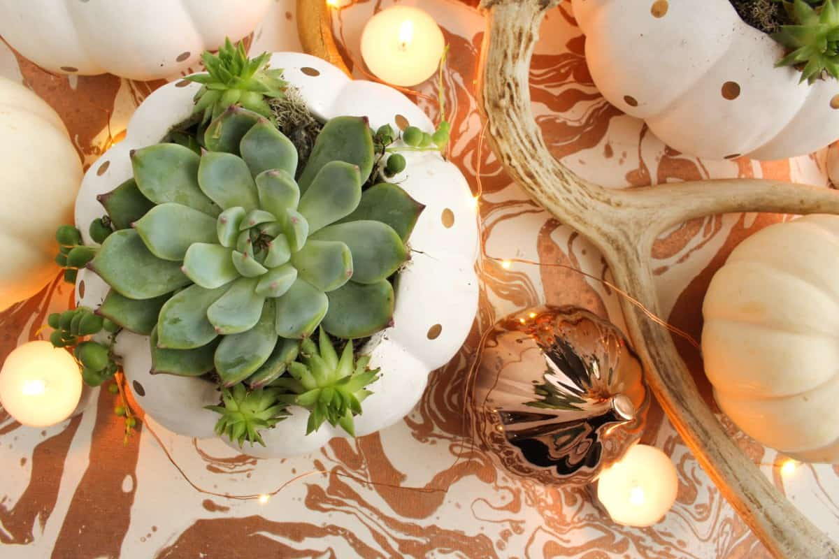 Copper and succulent fall centerpiece