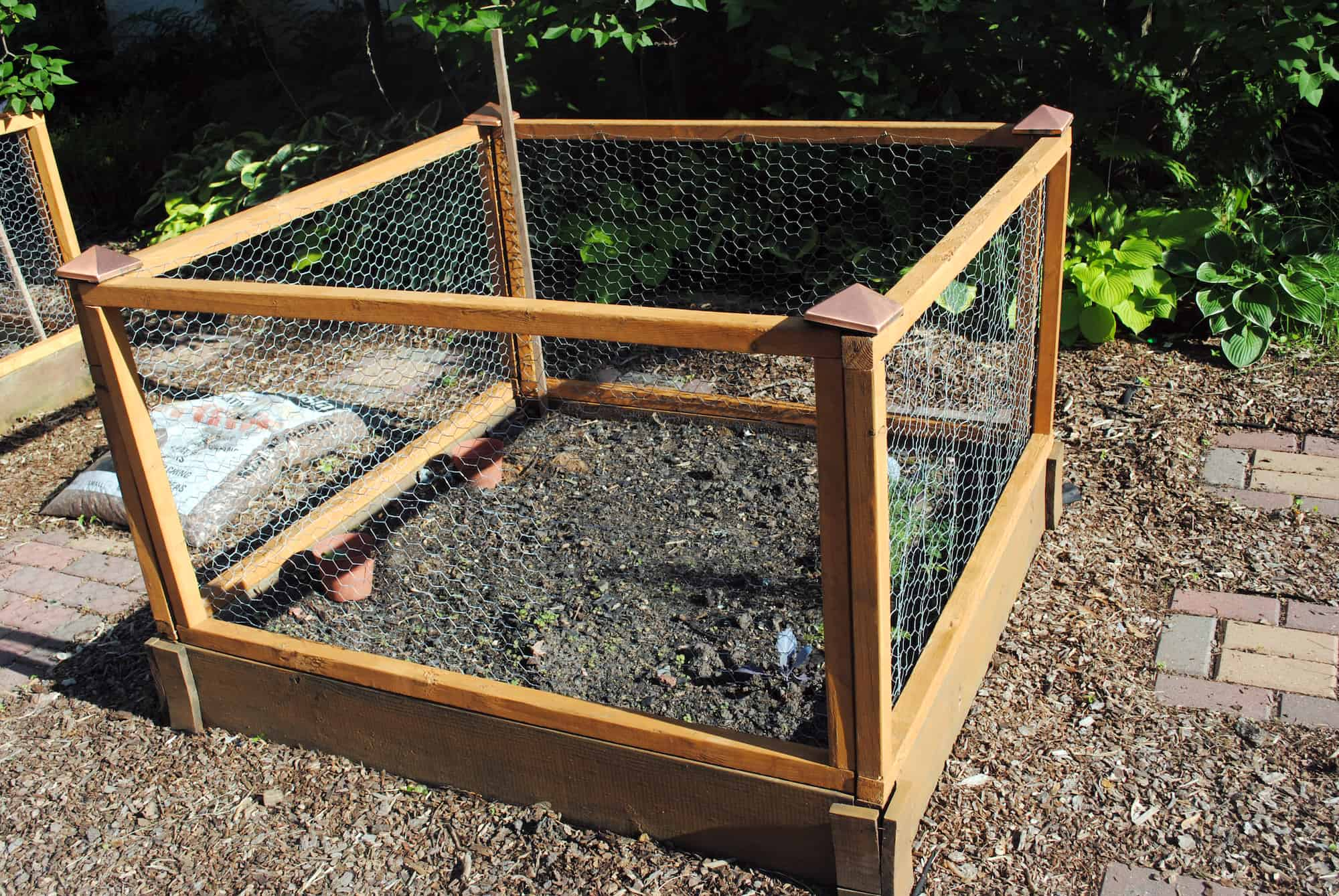 Consider make a low garden fence to keep critters out