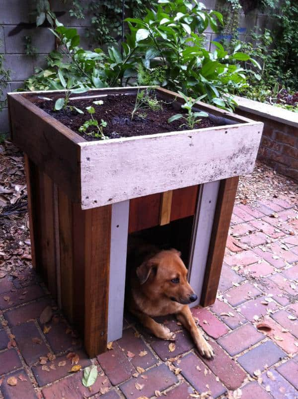 Garden roof dog house