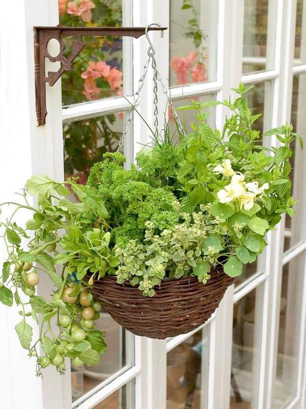 Hanging basket garden