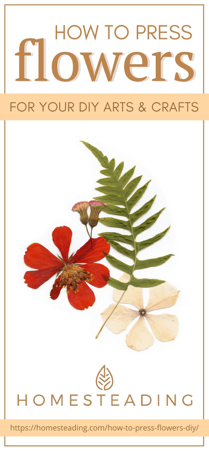 نحوه فشار دادن گل برای صنایع دستی گل خشک و گیاهان دارویی