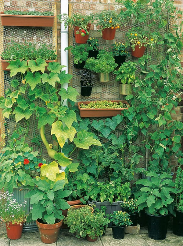 Wire and wood frame vertical vegetable garden