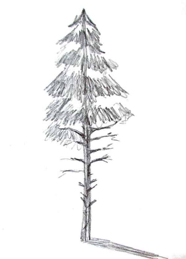 How to draw a pine tree 2
