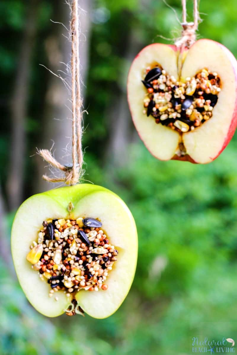 Apple birdseed homemade bird feeders diy