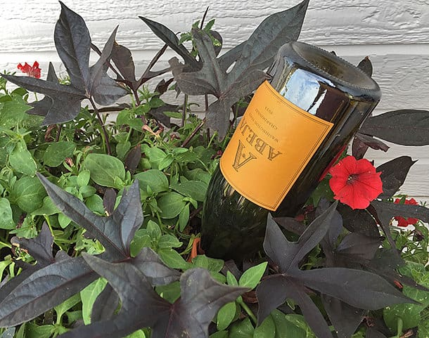Diy wine bottle self watering planter