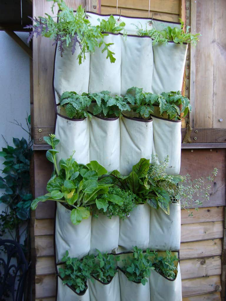 Pocket herb garden for balconies