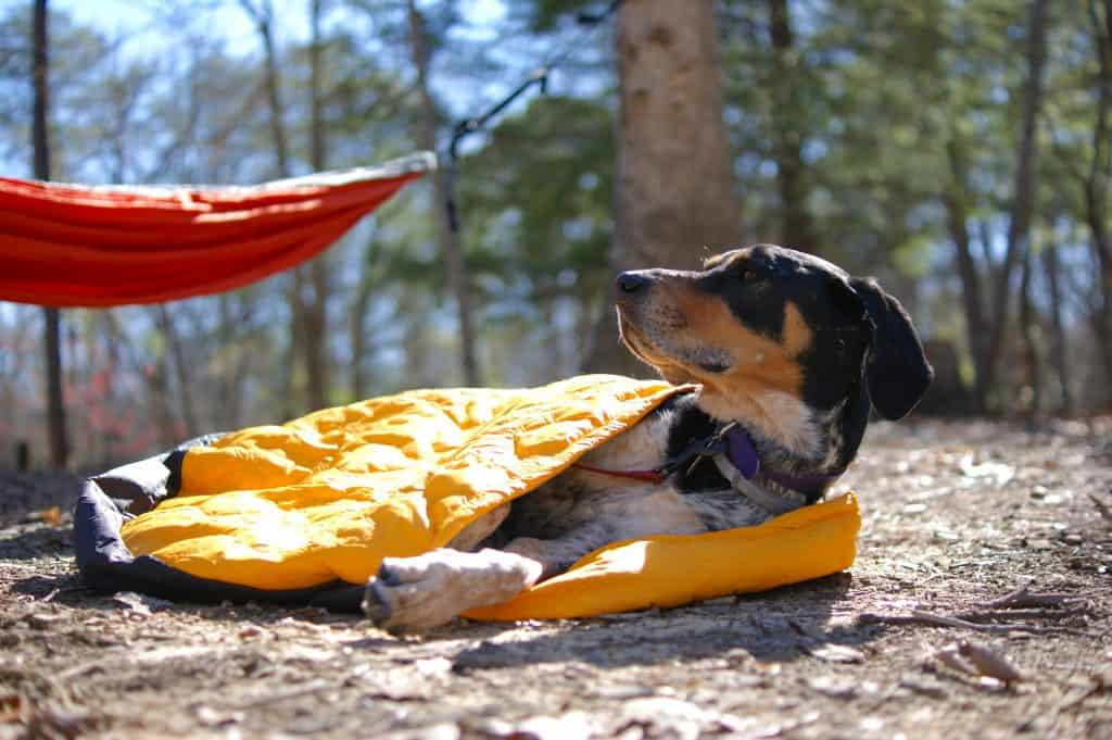 Sleeping bag cover as a doggie sleeping bag