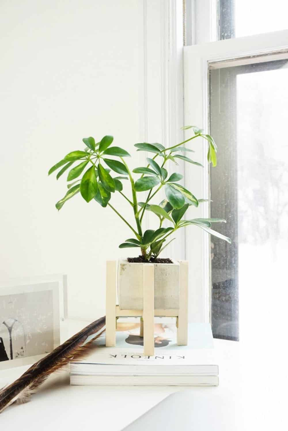 Diy concrete planter stand
