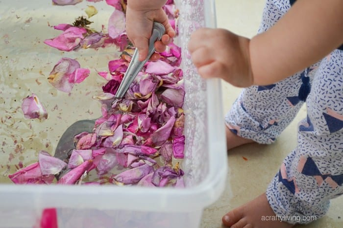 Dried flower sensory soup