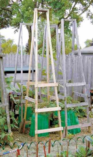 Folding tomato ladder