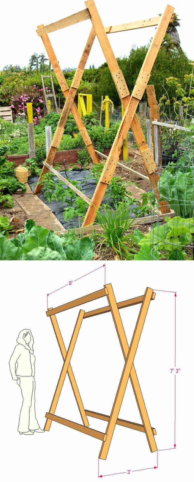 High, x frame, vertical tomato stand to grow many at once