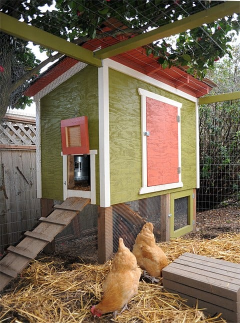 Riased urban chicken coop