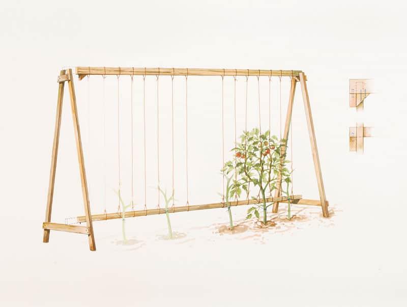 Tall a frame tomato trellis