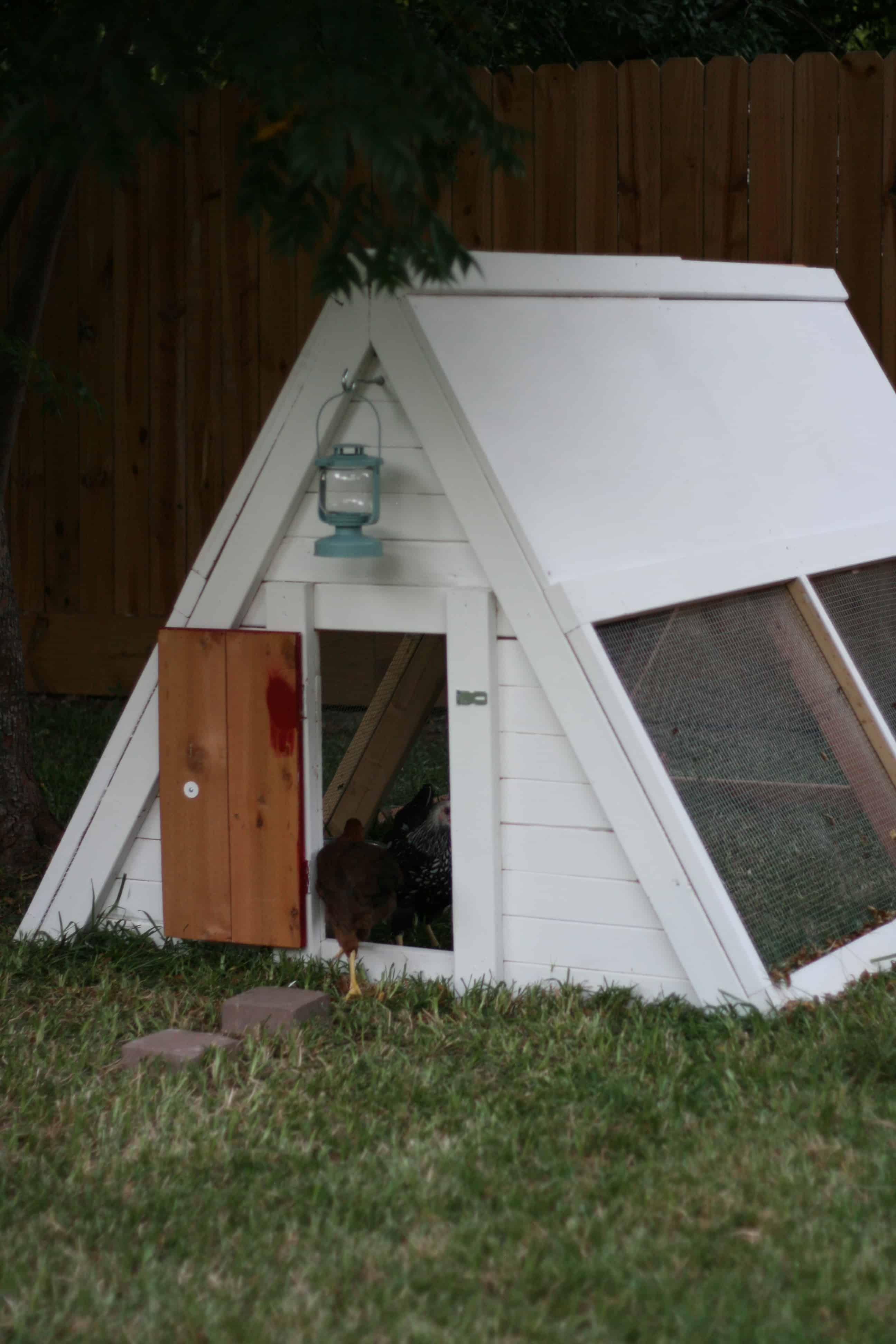 Tent style chicken coop
