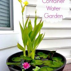 Diy water container garden