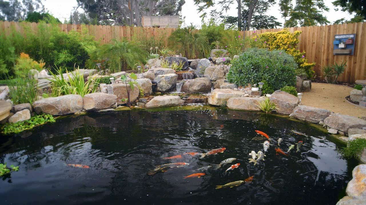 How to build a jumbo backyard koi pond