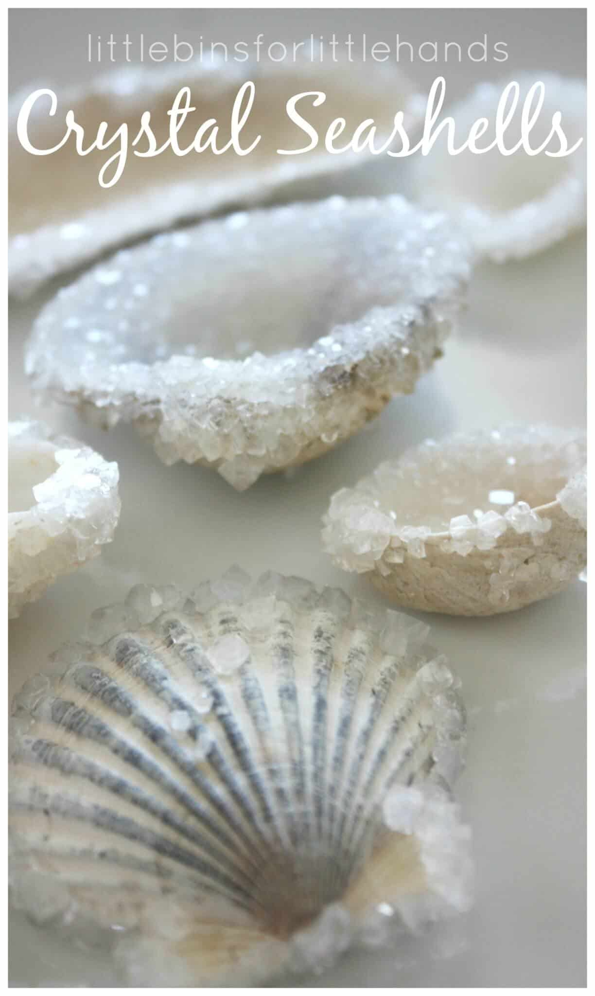 Crystal seashells ocean crystal growing science