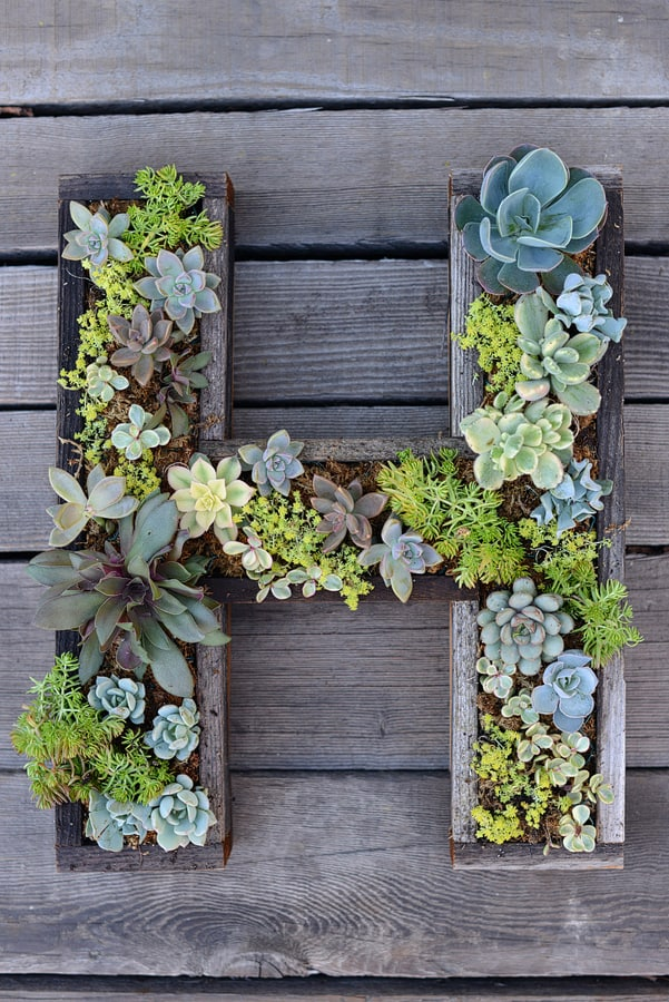 Diy wall mounted monogram succulent garden