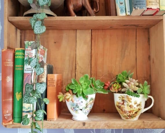 Succulent Fairy Garden Care - How To Create And Care For ...