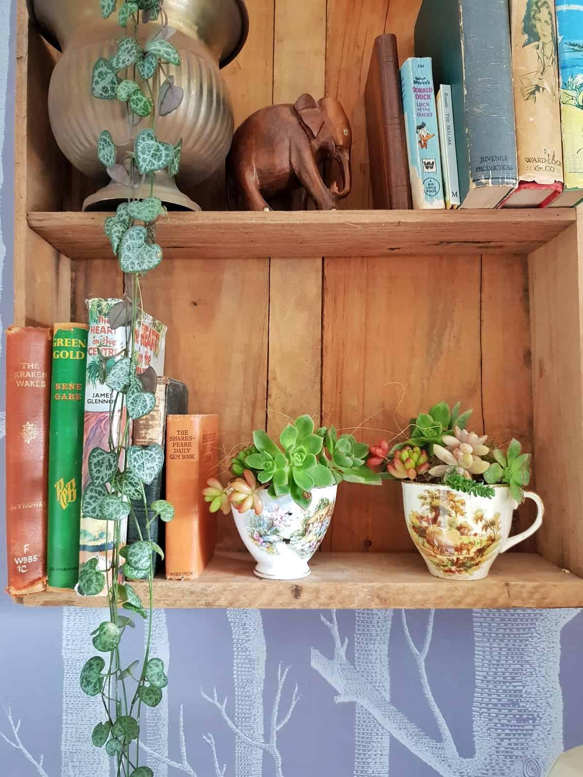 Mini succulent gardens in teacups