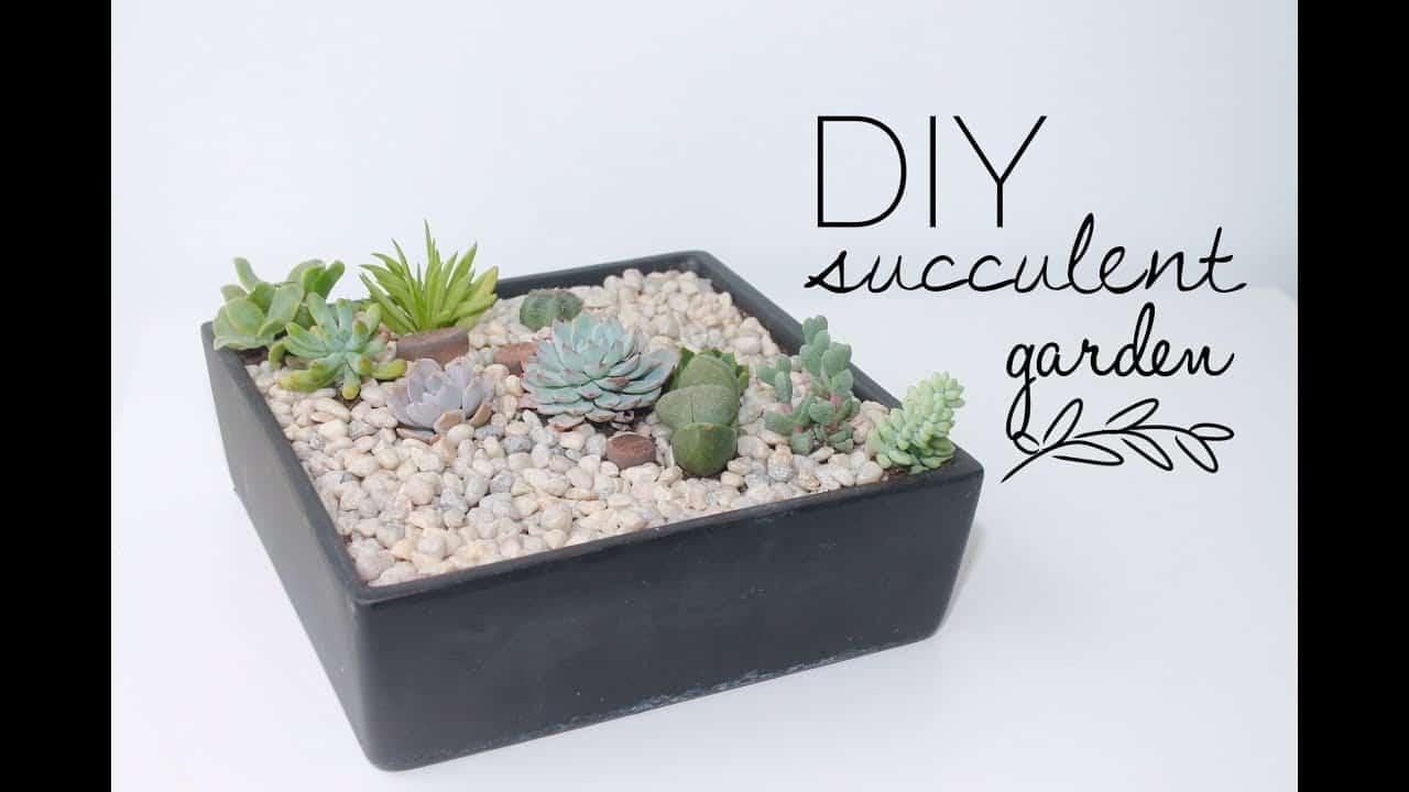 Miniature rock succilent garden