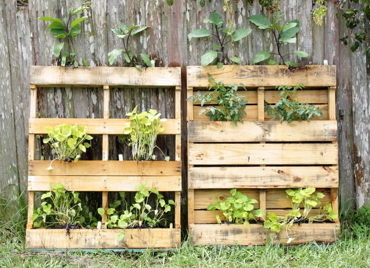 Recycled leaning pallet garden