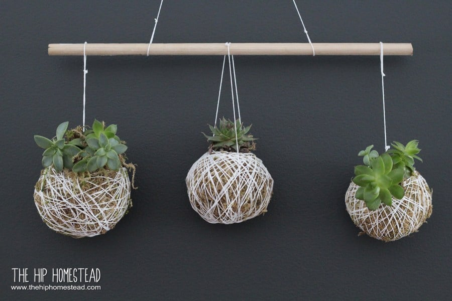 String wrapped hanging succulent balls