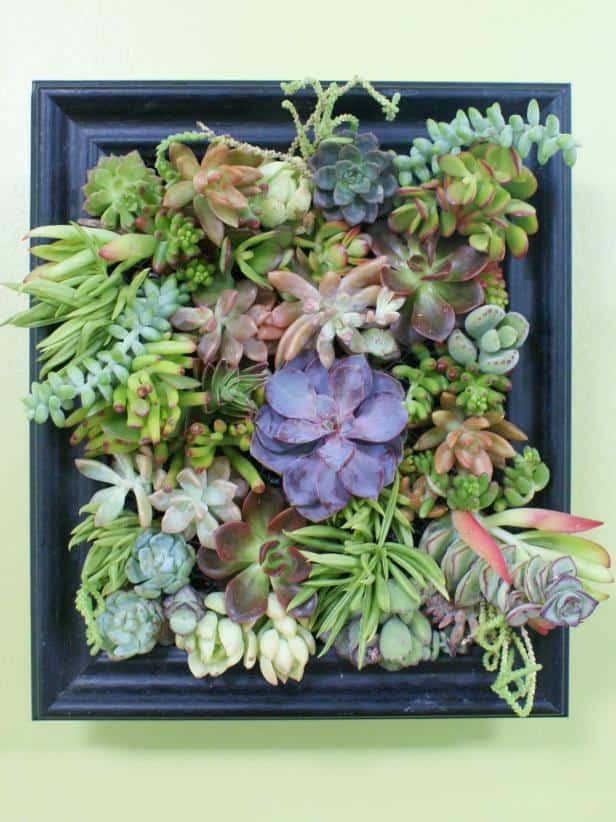 Succulennt garden shadow box