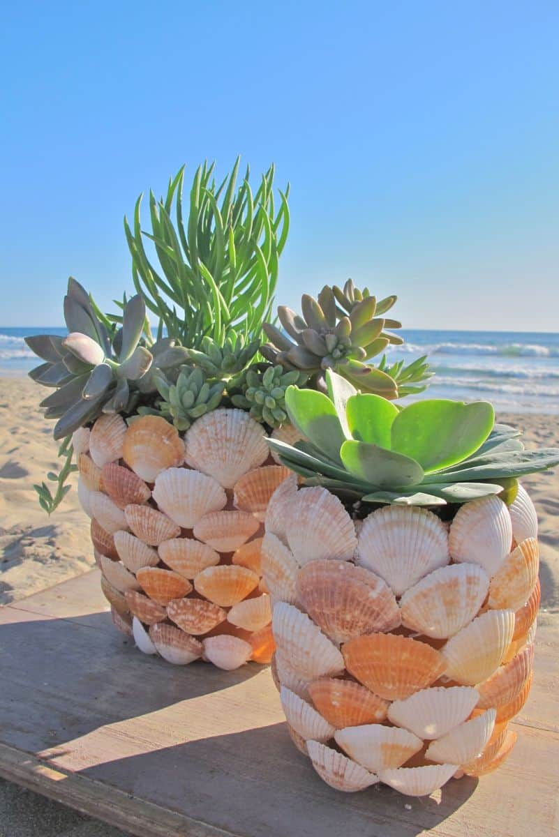 Diy layered seashell planter
