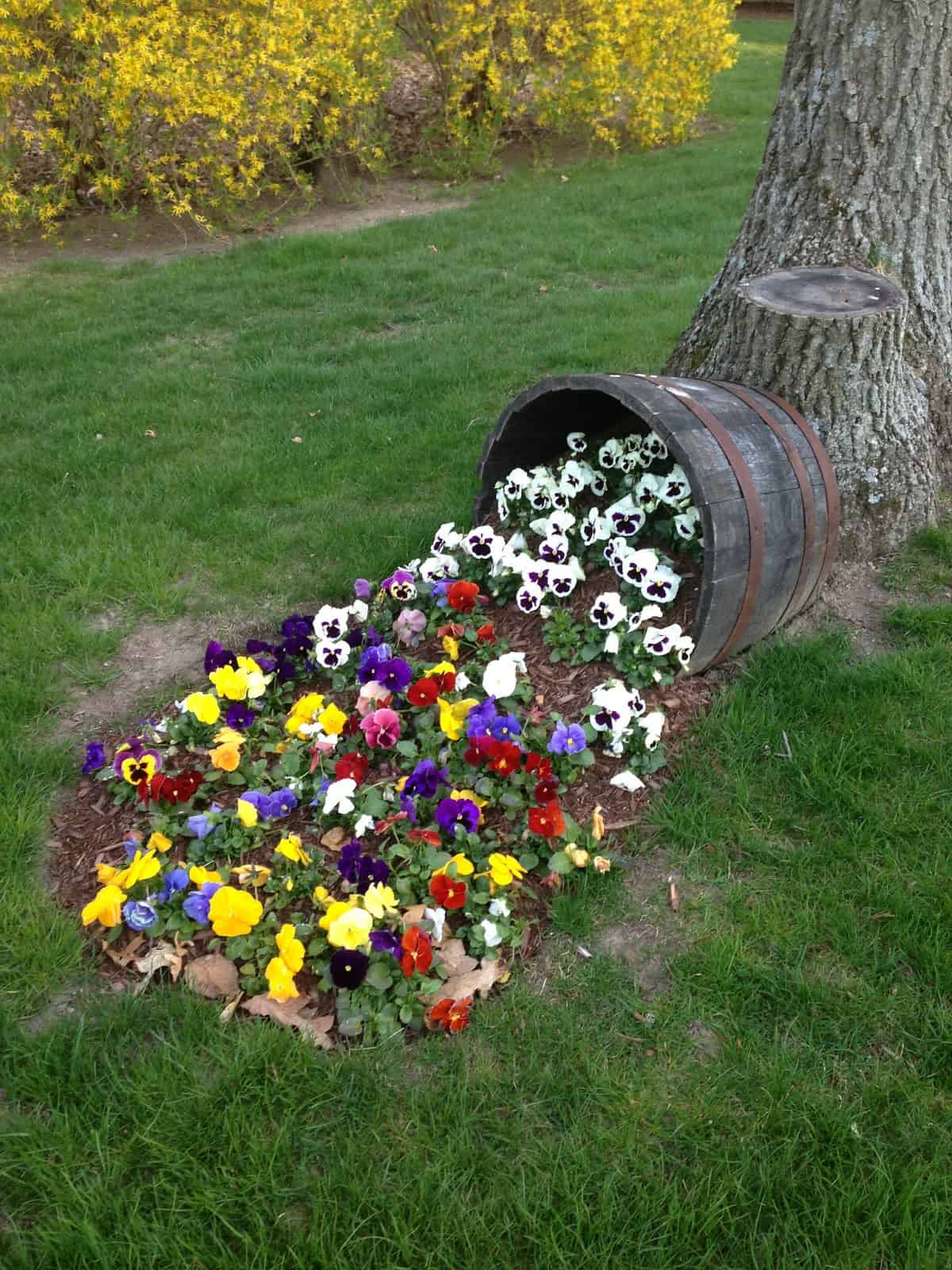 Overflowing wine barrel planter