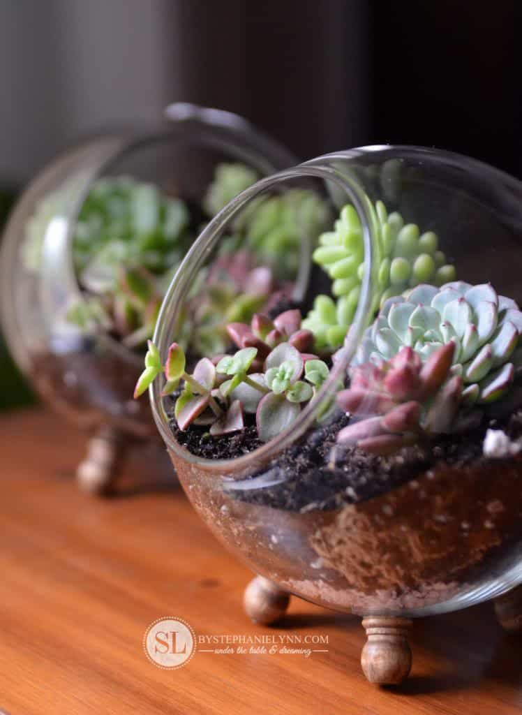 Diy glass globe terrarium