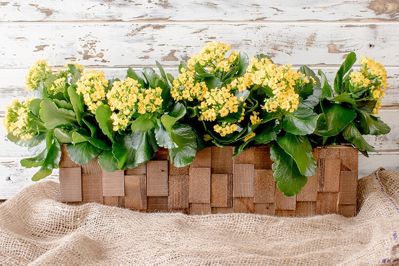Diy wooden planter