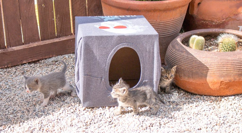 Cheap diy cat house from a t shirt