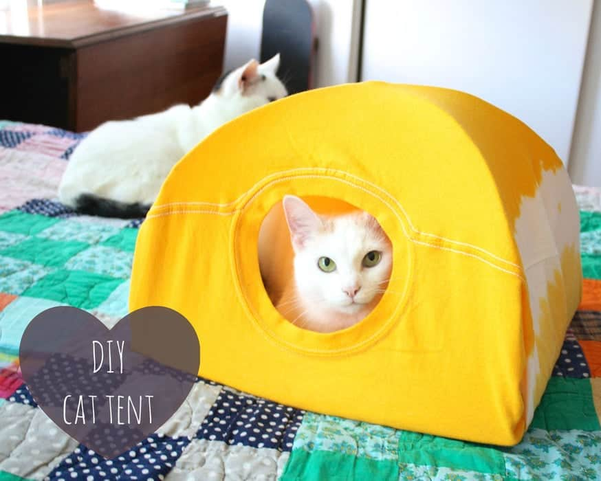 Diy cat tent from a tshirt