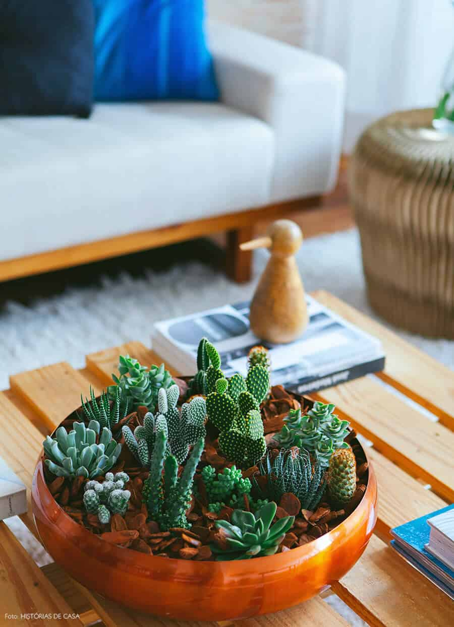 Fairy garden with cacti succulents