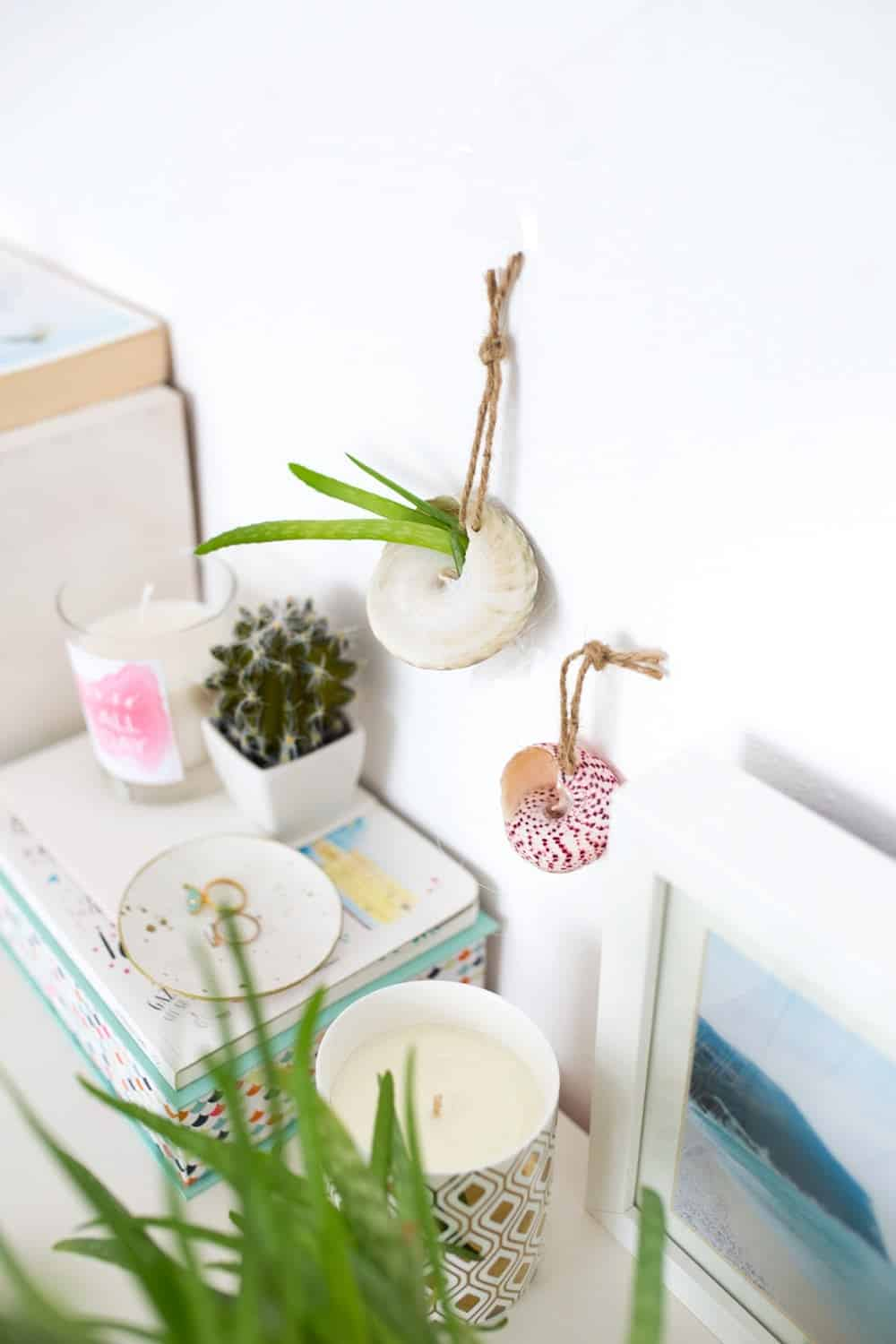 Shell hanging planter diy